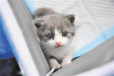عکس روز: نخستین گربه شبیه سازی شده چین