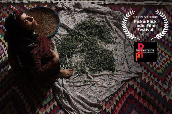 حضور فروزان از ایران در یک جشنواره هندی