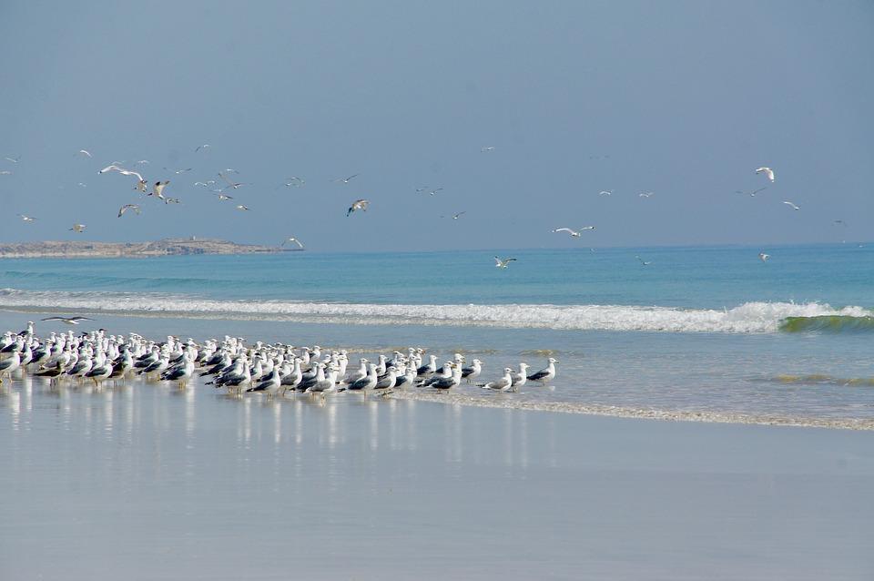 تماشایی ترین سواحل شهر مسقط