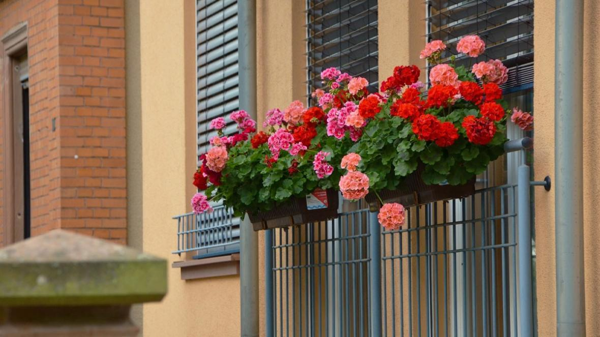 گل های مقاوم در برابر گرما را بشناسید و با داشتن آن ها لذت ببرید