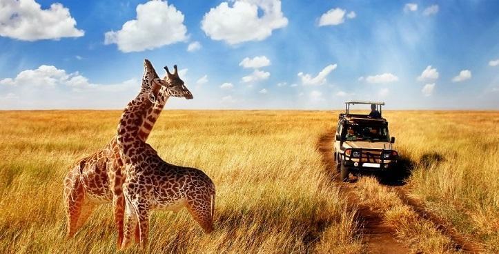 صنعت 29 میلیارد دلاری سافاری در معرض تهدید، صنعت گردشگری حیات وحش آفریقا از کار افتاد