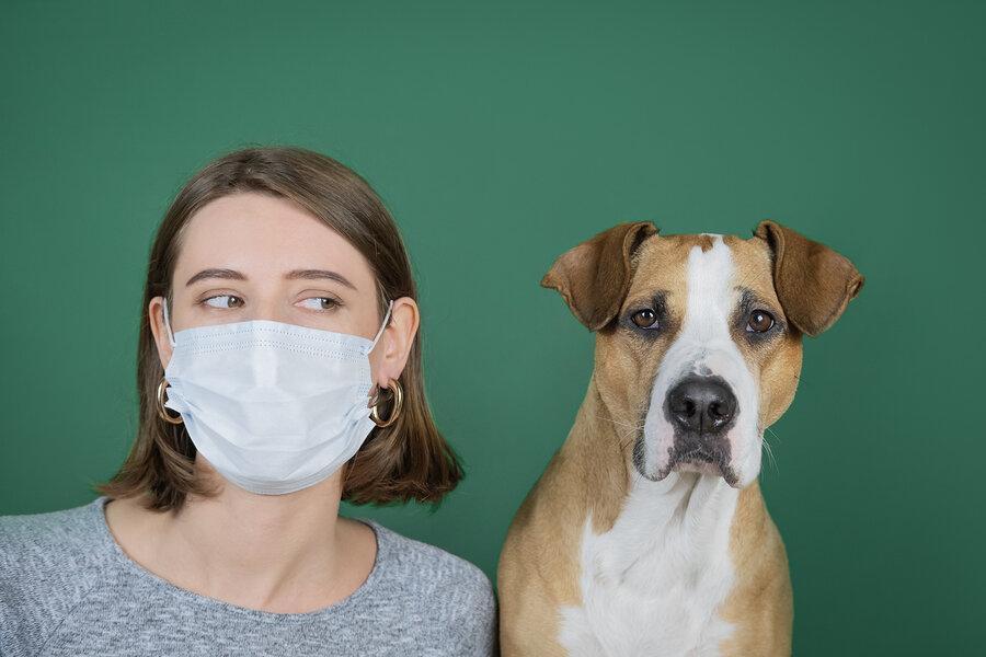 آیا باید از همه حیوانات خانگی تست تشخیص کرونا گرفته گردد؟