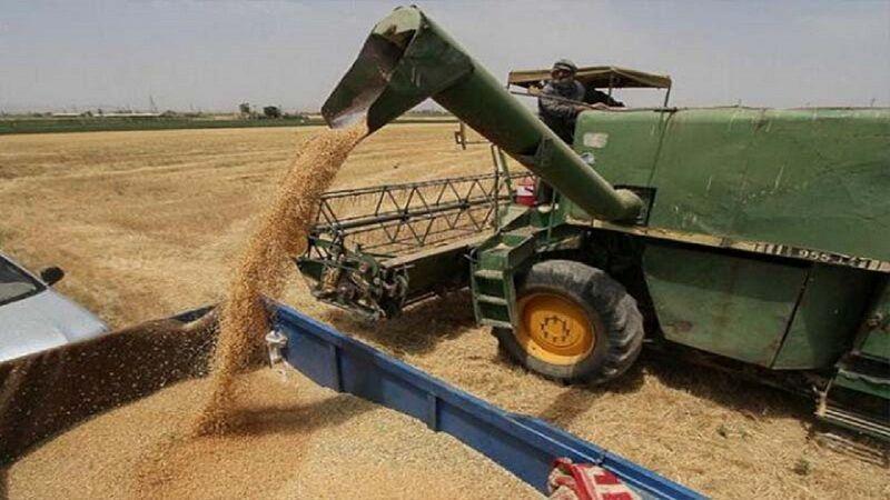 خبرنگاران خرید گندم در لارستان 61 درصد افزایش یافت