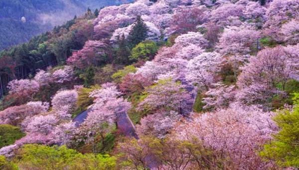 بهترین مناطق گردشگری فصل بهار در ایران