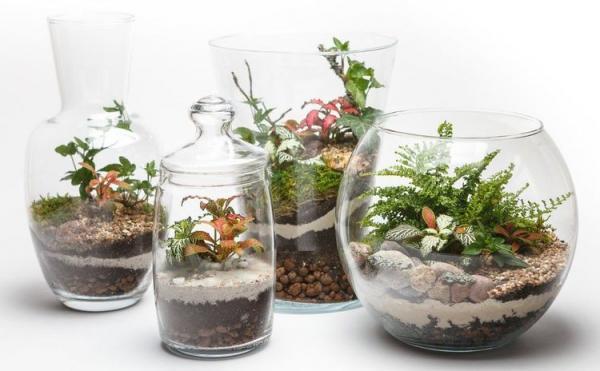 تراریوم یا باغ شیشه ای، از نحوه ساخت تا گیاهان مخصوص برای کاشت