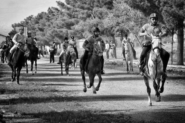 مقاله: هفت باشگاه و مرکز پرورش اسب در همدان فعال است